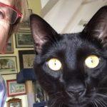 animalamour catsofinstagram lucky