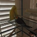 birds petsitting animalamourpsu wings lovemyjob
