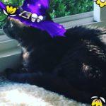 Kingsleys ready for Halloween animalamourpsu kitty cat
