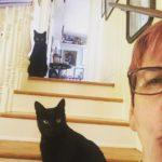 catselfie animalamourpsu loveyourjob