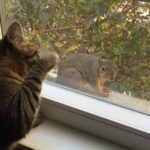 animalamourpsu hi squirrel how are you today? cats lovemyjob